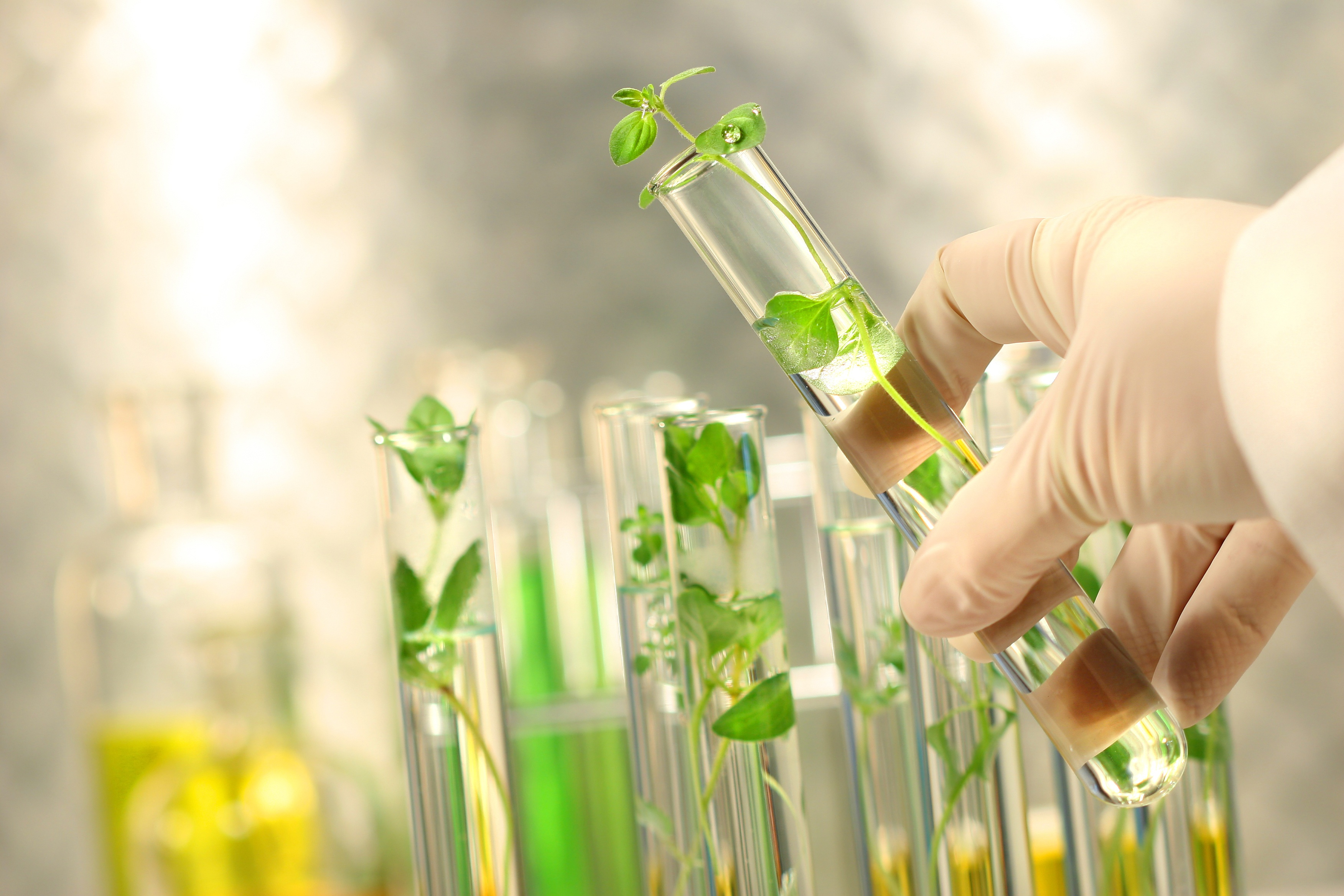 plant tissue culture applications free download book